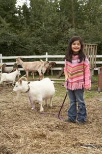 Comment construire une mangeoire à foin pour les chèvres pygmées