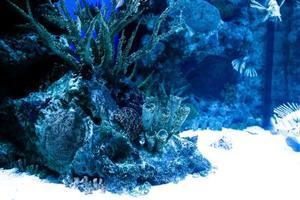 Idées de mise en aquarium