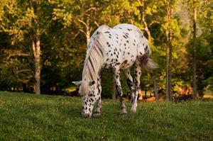 Traitement naturel pour les poux sur les chevaux