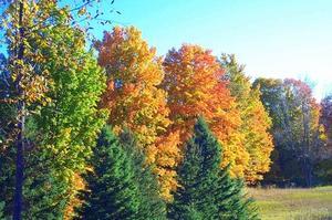 Que trois facteurs donnent les feuilles leurs nombreuses couleurs d'automne dans le nord-est de l'Amérique ?