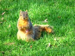 Comment se débarrasser des écureuils avec du poison