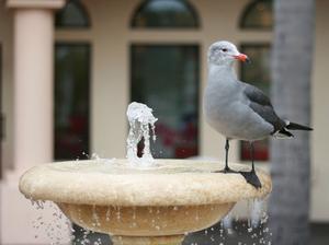 Ce qui est nécessaire pour construire une fontaine de bain d'oiseau ?