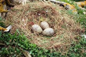 comment faire des nids de p ques avec des nouilles chow mein. Black Bedroom Furniture Sets. Home Design Ideas
