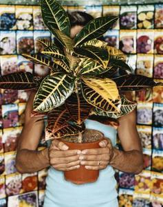 Comment faire pour s'occuper d'un Ficus Robusta