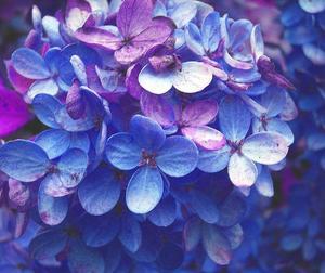 Comment faire un petit topiaire Floral