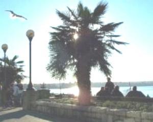 Soins d'un palmier moulin à vent