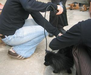 Sur les séchoirs à air chaud pour chiens