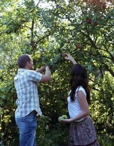 Comment greffer cire & Tape pour les arbres fruitiers