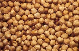 Comment faire germer des graines de noisette à la plantation
