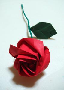 Sur les roses de papier