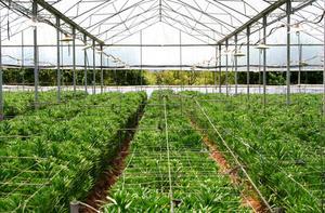 Comment faire pousser des légumes de serre pour le profit