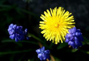 Herbe courte ou longue quand chaleur - Comment tuer les mauvaises herbes ...