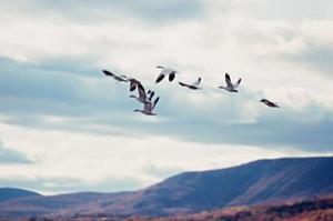 Comment faire une fosse de Goose