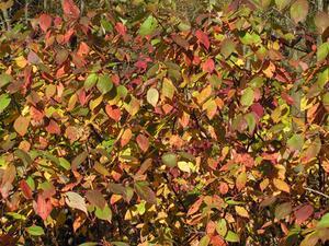 Plantes tropicales avec des feuilles vertes & rouges