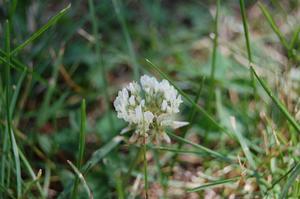 Comment se débarrasser des mauvaises herbes dans St. Augustine Grass
