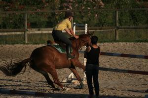 Camps de vacances équitation pour les enfants