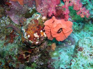Idées pour une chambre thème sous-marin