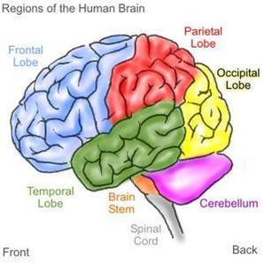 Symptômes de lésions cérébrales
