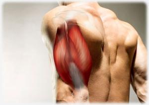 Exercices pour les quadriceps triceps biceps & ischio-jambiers