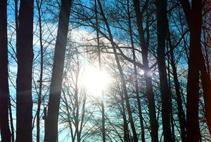 Comment fonctionne le soleil affectent les plantes ?