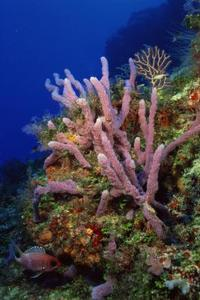 Types d'éponges dans le phylum des porifères