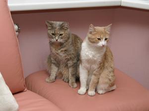 Remèdes maison pour les chats atteints de congestion