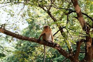 Idées fête singe fait maison