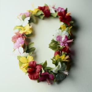 Différence entre un Hibiscus rustiques et Hibiscus Tropical