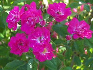 Fleurs de cette odeur comme les œillets