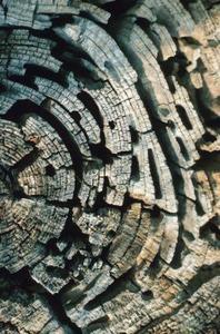 Quels genres de fourmis mangent le bois - Comment savoir si on a des termites ...