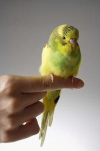 Oiseaux sur la liste des espèces en voie de disparition