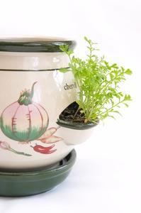 comment faire pousser des plantes dans des pots l 39 ext rieur. Black Bedroom Furniture Sets. Home Design Ideas