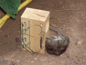 le meilleur app t pour les pi ges rats. Black Bedroom Furniture Sets. Home Design Ideas