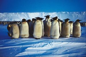 Comment faire des pieds & becs pour un costume de pingouin