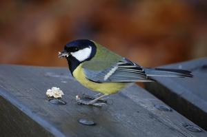 Identification des oiseaux pour les enfants