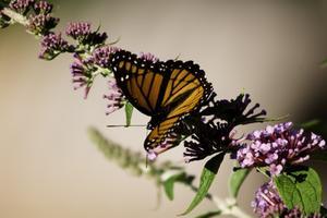 Chenilles & papillon activités pour le préscolaire