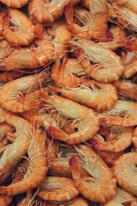 Comment raccorder les crevettes vivantes pour appât