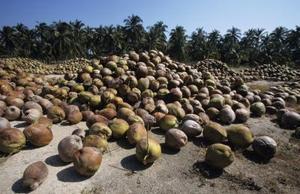 Comment faire un vase de fleurs à l'aide de coquilles de noix de coco