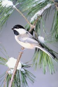 Comment faire pour attraper les oiseaux avec des pièges sans les tuer