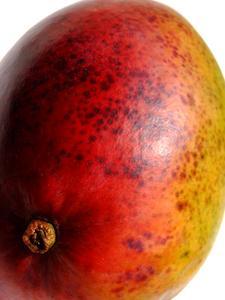 Comment appliquer du nitrate de potassium à manguiers