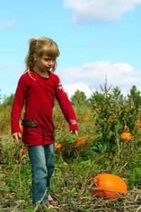 Comment planter des graines de citrouille pour les enfants