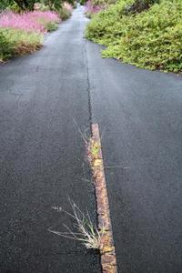 Comment faire pour tuer les mauvaises herbes en croissance à travers l'asphalte