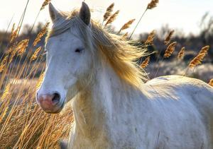 Faire l'insectifuge à base de plantes pour chevaux