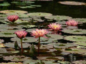 Faites-le vous-même Backyard étangs & cascades