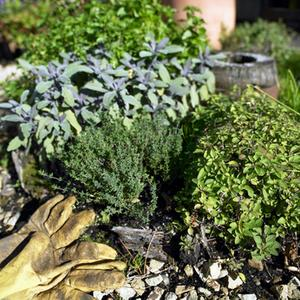 Plantes d'hiver pour jardinières