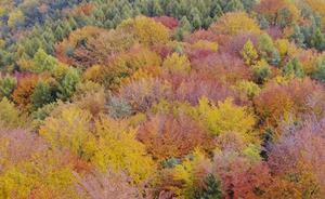 Les réseaux trophiques & chaînes d'une forêt à feuilles caduques