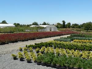 Sciarides en plantes d'intérieur