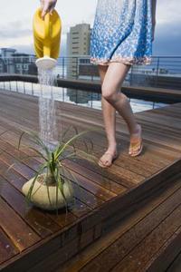 Plantes se développent mieux dans l'eau sucrée salée ou eau du robinet ?
