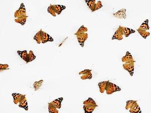 Solutions de rechange papillon Release