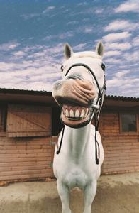 Comment se débarrasser des puces sur les chevaux
